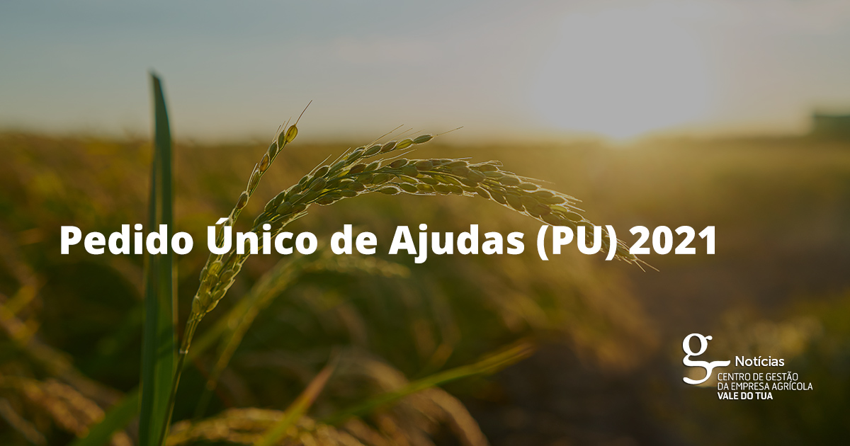 PEDIDO ÚNICO 2021 - APRESENTAÇÃO DE CANDIDATURAS